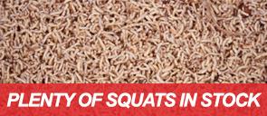 Plenty of Squats in Stock